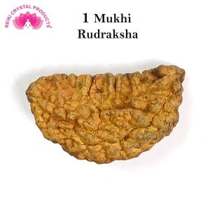 1 Mukhi/Single Face Original Nepal Rudraksha (Brown Round Bead) with Lab Certificate