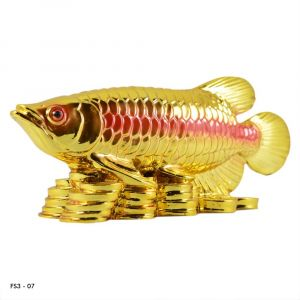 Feng Shui Fish With Coins for Career Luck and Education Luck